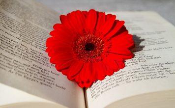 book-3259352_960_720